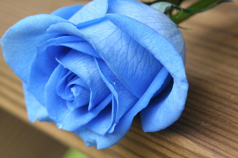 cách làm hoa hồng xanh
