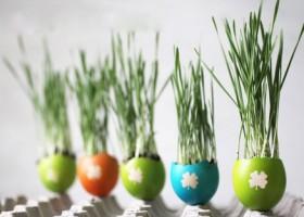 Chậu cây nhỏ xinh bằng vỏ trứng